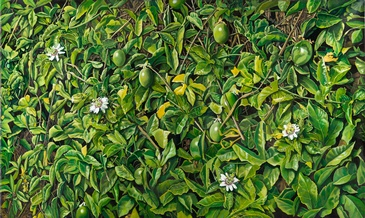 Passion Fruit, Pasciflora - Imaginative Realism by Howard Fox Contemporary Realist Painter